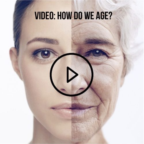 VIDEO: How do we age, and how to prevent it.